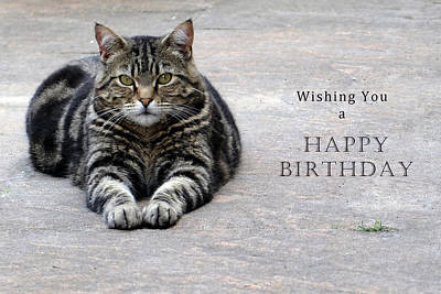 Wishing You A Happy Birthday Tabby Art Print by Michele Wright