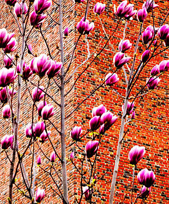 Repetition Photograph - Wishwise Blossoms And Bricks 2013 by James Warren