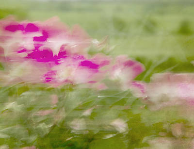 Art Print featuring the photograph Wisp by Linde Townsend