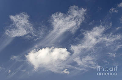 Photograph - Wispy by Dee Cresswell