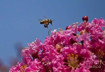 Wisteria And Honey Bee   #2662 Original