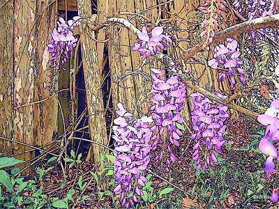 Photograph - Wisteria And Old Fence by Rebecca Korpita