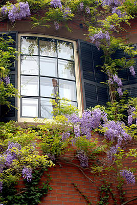 Photograph - Wisteria And Window  by Caroline Stella