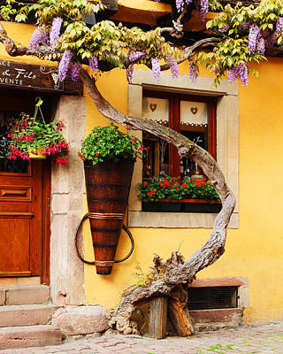 Wisteria In Bloom Photograph - Wisteria And Yellow Wall In Alsace France by Greg Matchick