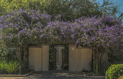 Have A Cupcake - Wisteria arbor by Jane Luxton