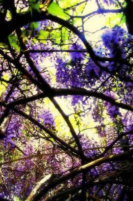 Wisteria Branches Print by Jodie Marie Anne Richardson Traugott          aka jm-ART