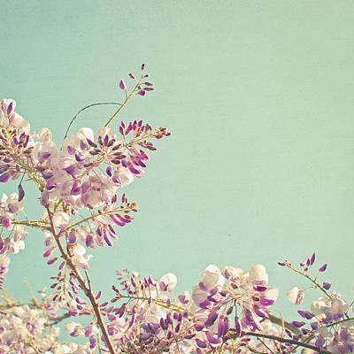 Cassia Photograph - Wisteria by Cassia Beck