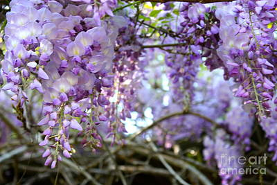 Wisteria Dream Art Print by Cathy Dee Janes