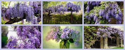 Photograph - Wisteria Collection by Jessica Jenney