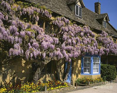 Wisteria Cottage  Original