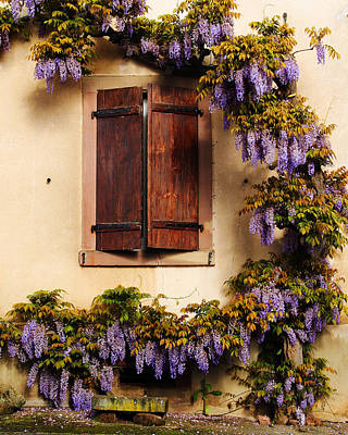 Wisteria Encircling Shutters In Riquewihr France Art Print by Greg Matchick
