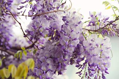 Photograph - Wisteria Garden 6 by Jenny Rainbow