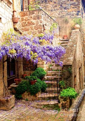 Photograph - Wisteria In Saint Guilhem Le Desert - France by Cristina Stefan