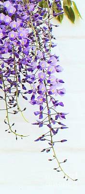 Photograph - Wisteria  by Katy Mei