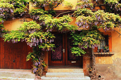 Wisteria In Bloom Photograph - Wisteria On Home In Zellenberg France 2 by Greg Matchick
