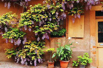 Wisteria On Home In Zellenberg France Art Print by Greg Matchick