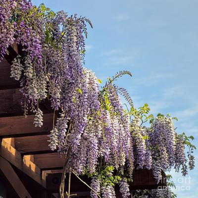 Photograph - Wisteria by Peggy Hughes