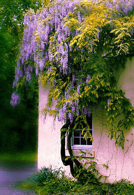 Photograph - Wisteria Tree by Jessica Jenney
