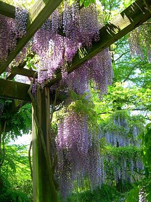 Wisteria In Bloom Photograph - Wisteria Trellis by Susan Maxwell Schmidt