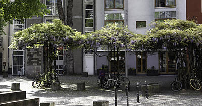 Wisteria Umbrella Arbors Cologne Art Print by Teresa Mucha