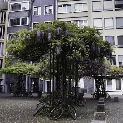 Wisteria Umbrellas Cologne Art Print by Teresa Mucha