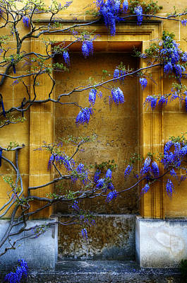 Photograph - Wisteria Wall by Mick House