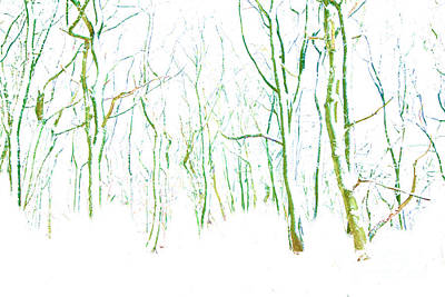 Photograph - Wistful Winter Forest by David Birchall