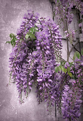 Photograph - Wistful Wisteria by Jessica Jenney