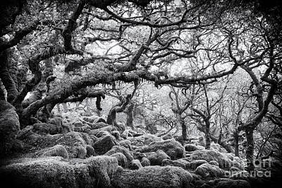 Wistmans Wood Dartmoor Devon  Art Print by Tim Gainey