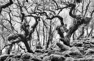 Wildwood Photograph - Wistmans Wood Devon by Tim Gainey