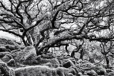 Devon Photograph - Wistmans Wood  by Tim Gainey