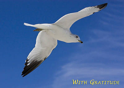 Custom Ring Photograph - With Gratitude by Dawn Currie