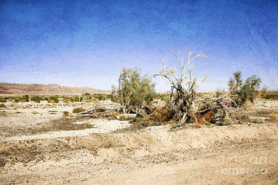 Photograph - Withered Bushes In The Desert by Gabriele Pomykaj