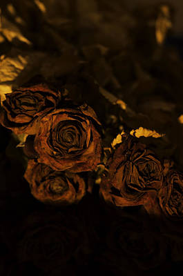 Photograph - Withered Roses by Henrik Petersen