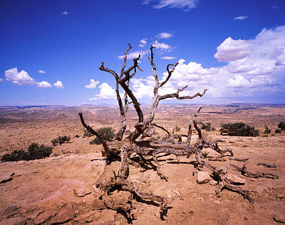 Photograph - Withered Tree Paria Canyon by Rich Franco