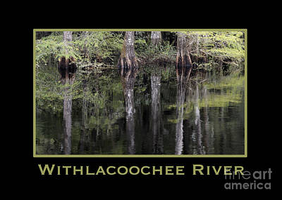 Photograph - Withlacoochee River In Florida by Nancy Greenland