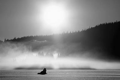 Wolf Basking In Sunlight Near Juneau Art Print by John Hyde