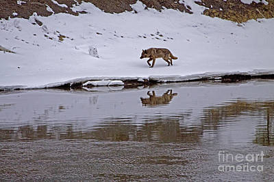 Thomas Kinkade Rights Managed Images - Wolf By The Yellowstone River   #0823 Royalty-Free Image by J L Woody Wooden