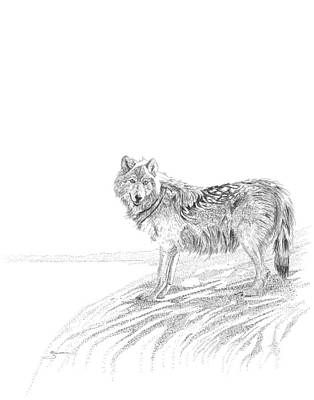 Drawing - Wolf by Carl Genovese