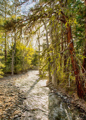 Wolf Creek Afternoon Light Art Print by Omaste Witkowski