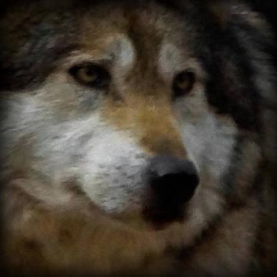 Wild Dog Digital Art - Wolf Dreams by Ernie Echols