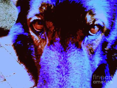 Wolf Eyes Art Print by Nina Kaye