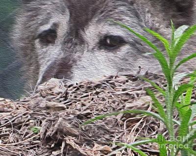 Photograph - Wolf Hunting by Dawn Gari