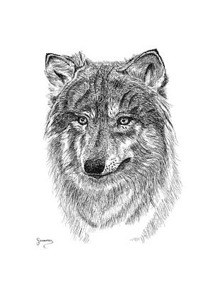 Drawing - Wolf II by Carl Genovese