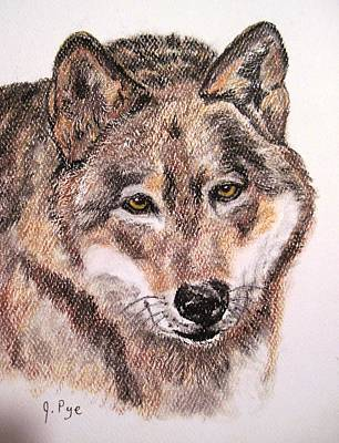 Drawing - Wolf by Joan Pye