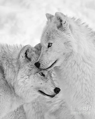 Wolf Love Black And White Art Print