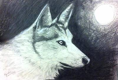 Buy Drawing - Wolf by Marcello Cicchini