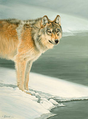Wolf Portrait-lamar Valley  Art Print