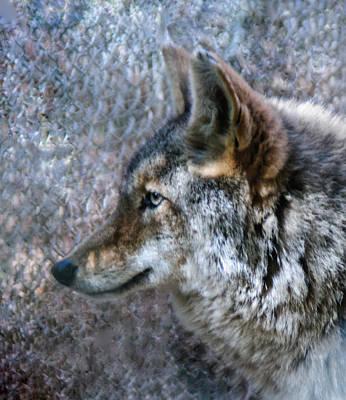 Photograph - Wolf Portrait by Tam Ryan