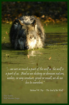 Photograph - Wolf Quote 1 by Shari Jardina